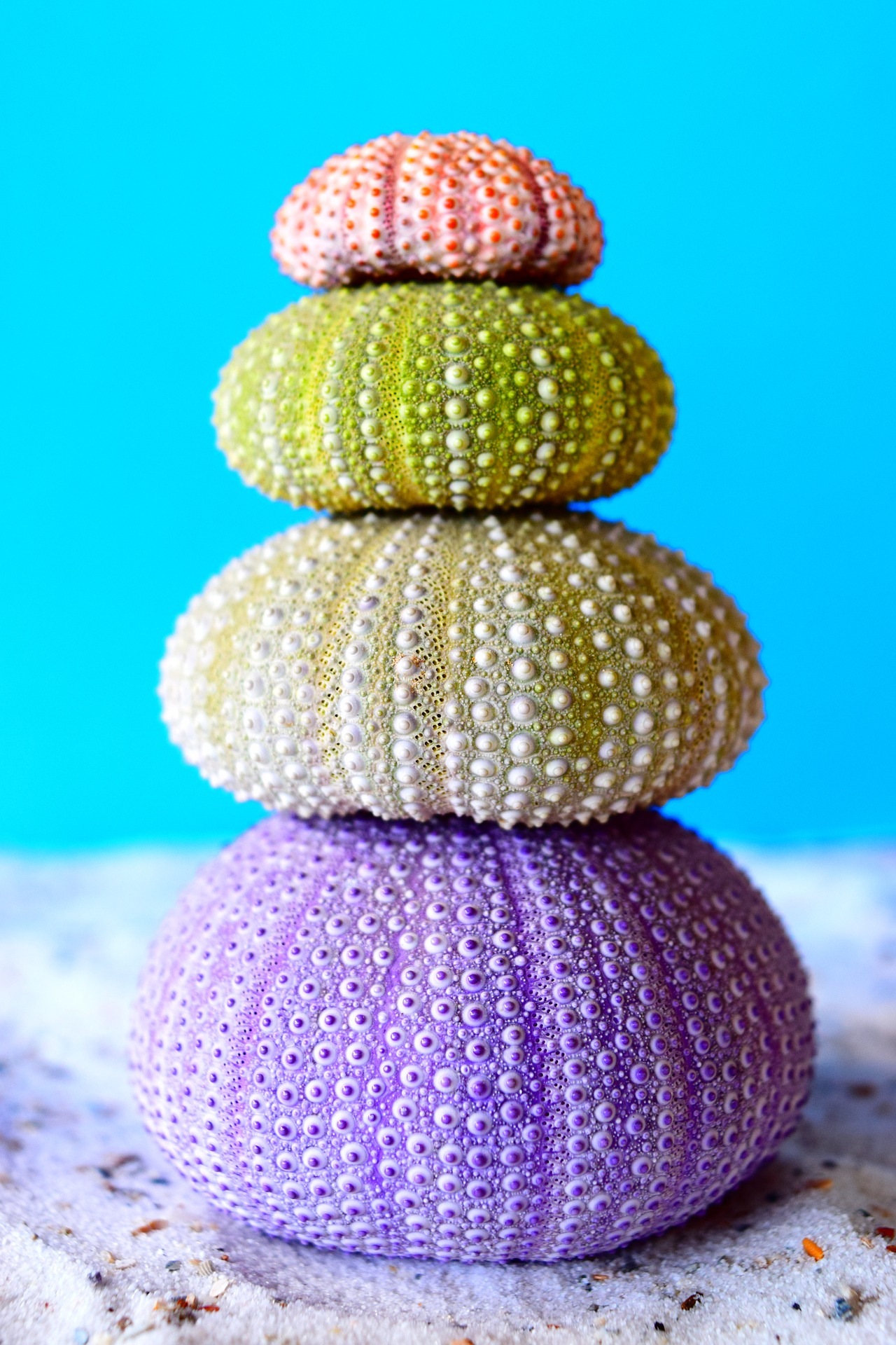 sea-urchins-663508_1920